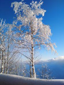 Neve 8